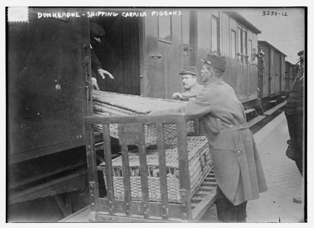 Donkerque [i.e., Dunkerque] -- shipping carrier pigeons