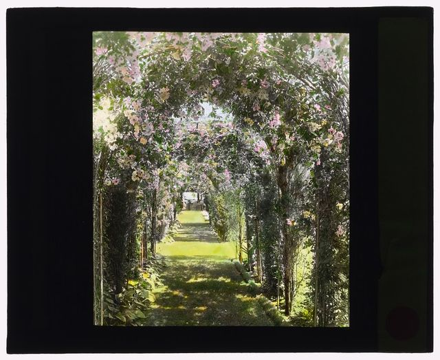 [Dr. Peter Brown Wyckoff house, Gin Lane, Southampton, New York. Arbor pathway]