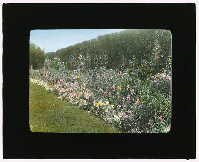 [Dr. Peter Brown Wyckoff house, Gin Lane, Southampton, New York. Flower border]