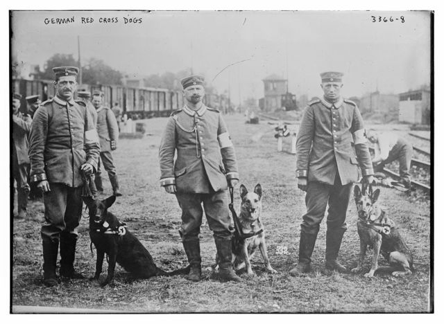 German Red Cross dogs