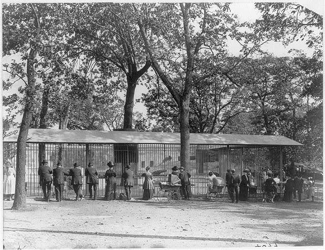 [Mass. - Boston - Franklin Park Zoo in Jamaica Plain; view of visitors looking at bear cages]