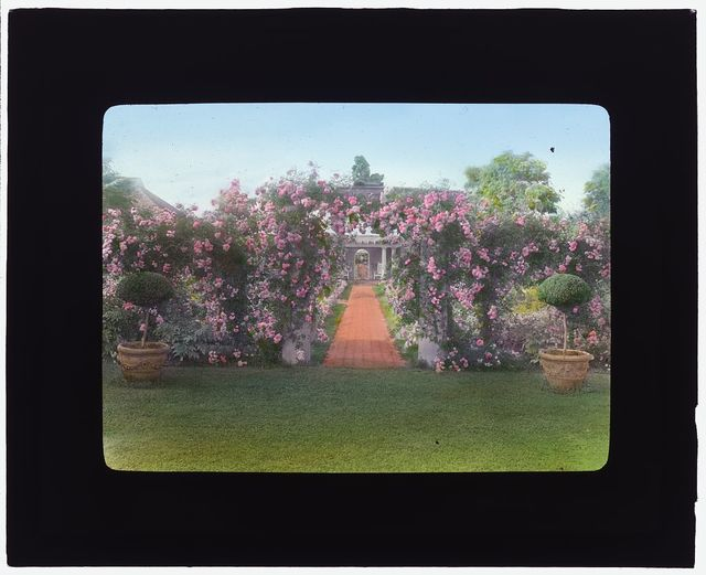 "[""The Fens,"" Lorenzo Easton Woodhouse house, Huntting Lane, East Hampton, New York. Rose arbor]"