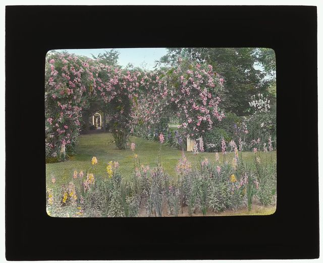 "[""Westlawn,"" Edward Tiffany Dyer house, Great Plains Road, Southampton, New York. Rose arbor]"