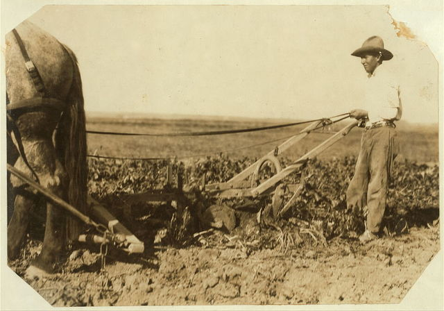 A Deere pulling machine, two horses. These merely loosen the soil, leaving the final pull to be exerted by the workers. Hine. Oct. 1915.  Location: Colorado.