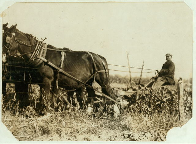 A Giddings beet-puller, drawn by 4 horses. The two knives pass along the sides of the beet rows and loosen the soil -- but they do not pull the beets -- the workers finish pulling by hand, often with some extra exertion. A kind of hand plow puller is often used on small farms. Near Sterling, Oct. 23/15.  Location: Sterling [vicinity], Colorado.