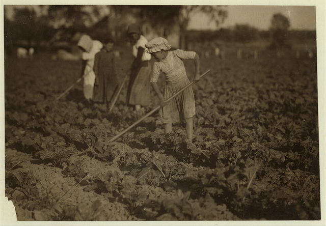 Barbara Lieber, nine-year old beet worker hoeing with her eleven-year old sister on a Wisconsin farm near St. John. See Hine Report, Wisconsin Sugar Beet, July 1915.  Location: St. John [vicinity], Wisconsin.