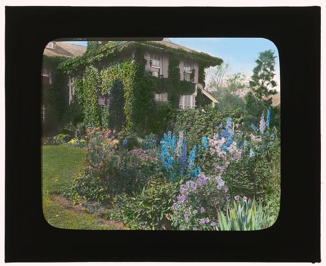 [Dr. Frederick Kellogg Hollister house, Lily Pond Lane, East Hampton, New York. Delphiniums]
