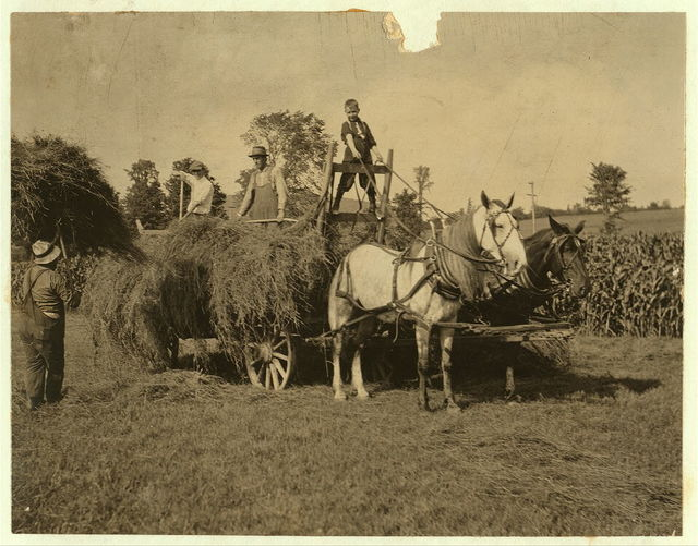 Eight-year old Jack driving load of hay. See Hine Report, Rural Child Labor, August, 1915.  Location: Western Massachusetts, Massachusetts.