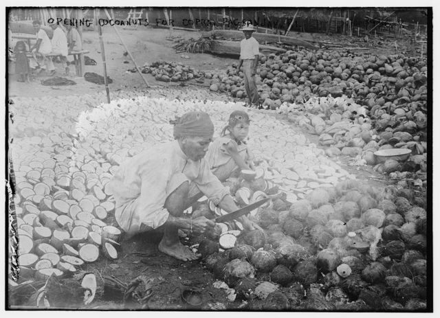 Opening Coconuts for Copra, Pagsanjan, P.I.