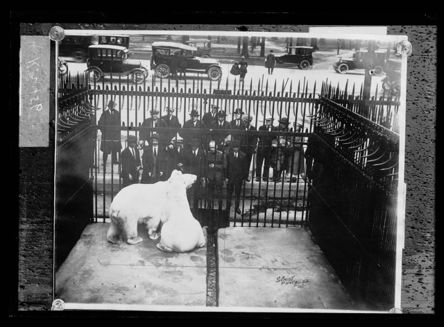 [Polar bear in cage]