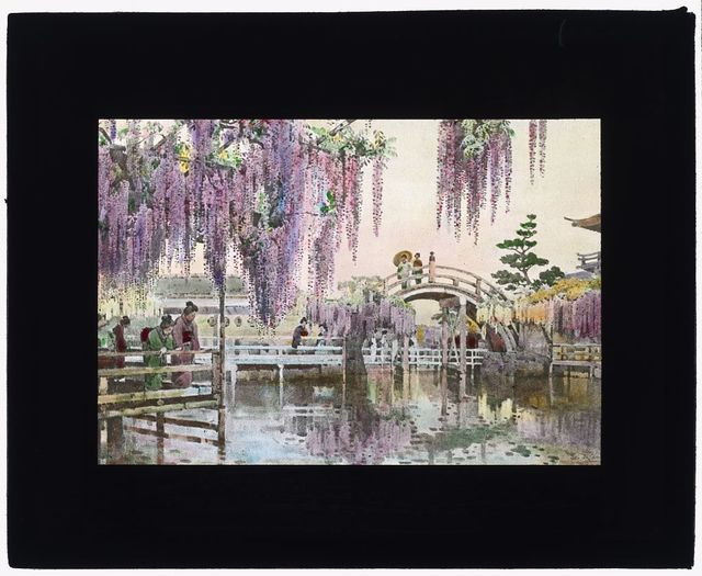 """[Reproduction of illustration: """"Wisteria Kameido""""]"""