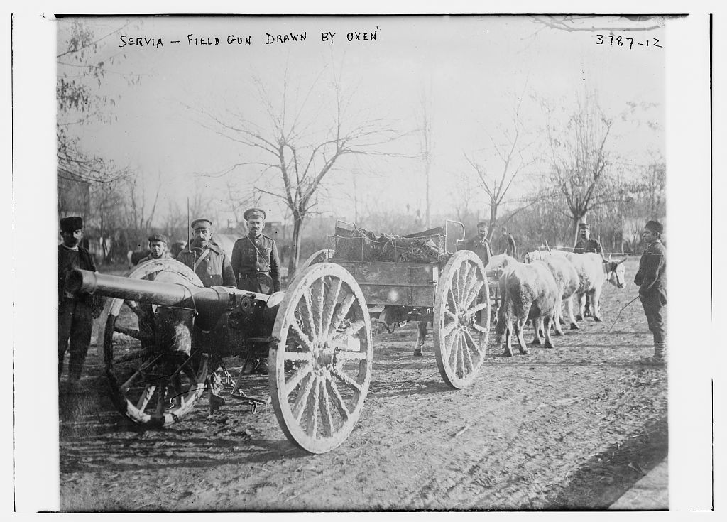 Servia [i.e., Serbia] -- field gun drawn by oxen