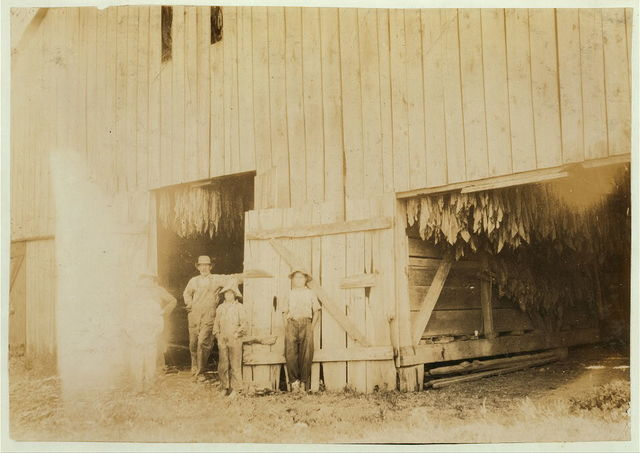 Barn of Daniel Barrett and group shown in photos 4464-5-6.  Location: Henderson County--Spottsville, Kentucky / Lewis W. Hine.