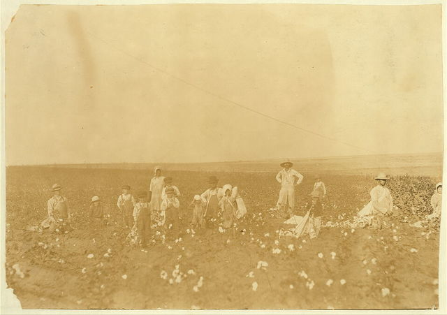 Benton Hill, a renter, Tinney, Okla. Two other families were helping Mr. Hill and his children pick his cotton. Four adults and 10 children of following ages: 1 boy of 3 years, 2 boys and 1 girl of 5 years, 1 boy and 1 girl of 7 years, 1 boy of 8, 1 boy of 9 years, 1 girl of 11 years and 1 boy of 15 years. Everyone had a sack and was picking industriously. The parents said that Fred, 3 years old, sometimes picks 20 pounds a day and Vera, 5 years old, picks 25 pounds a day. See photos of Fred and Vera.  Location: Comanche County, Oklahoma / Lewis W. Hine.