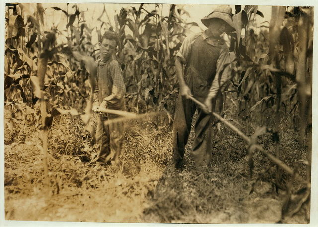 """Chopping corn"" Everett Adams, 15 years and Ora Adams, 9 years. Address Hiatt, Ky. Go to Hickory Grove School, but they have been absent most of the past 6 weeks for work, sickness, etc.  Location: Rockcastle Co., Kentucky / Lewis W. Hine."