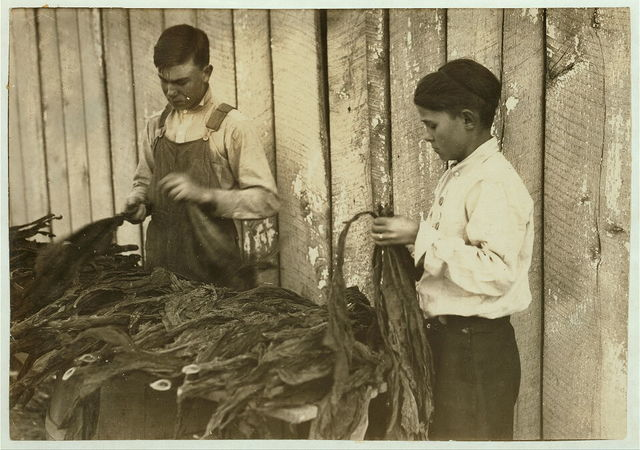 [c/o W.A. Daniel - Route 2 - Woodburn, Ky. Lester Daniel, [...] years old and 17-year old cousin stripping tobacco. See Kentucky report and special card.]  Location: [Woodburn, Kentucky] / [Lewis W. Hine]