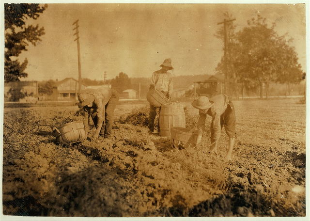 Digging potatoes. 14 and 16 years old.  Location: Hardin County--West Point [vicinity], Kentucky / Lewis W. Hine.