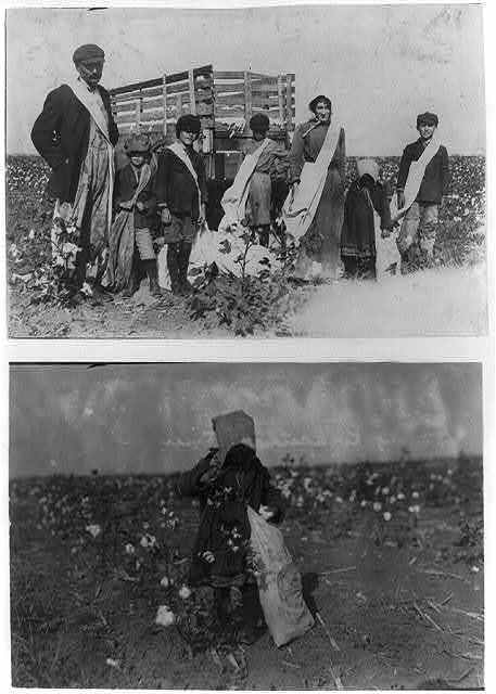 "Dovey Kirkpatrick, 5 years old, picks 15 pounds of cotton a day (average) Mother said: ""She jess works fer pleasure."" See photos 4555 to 4557.  Location: Comanche County, Oklahoma / Lewis W. Hine."
