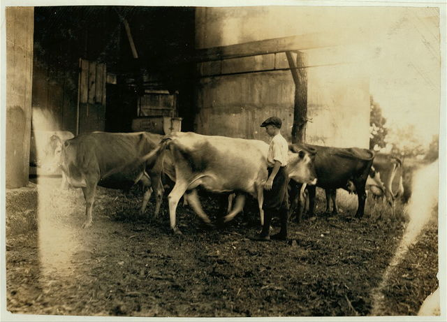 Edgar Kitchen 13 yrs. old gets $3.25 a week working for the Bingham Bros. Dairy. Drives a dairy wagon from 7 A.M. to noon. Works on farm in afternoon (10 hours a day) seven days a week--half day on Saturday. Thinks he will work steady this year and not go to school. See previous labels in June. Not in Div. 5 or 6. Lives in Bowling Green.  Location: Bowling Green [vicinity], Kentucky / Lewis W. Hine.