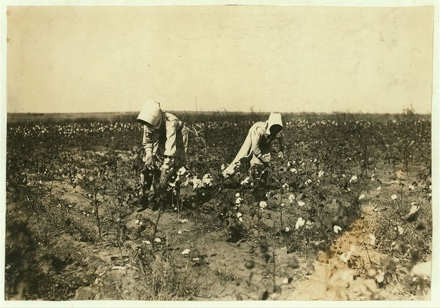 Hazel Davis, Tinney, Okla. 7 years old. Picks 50 pounds of cotton in half a day, according to testimony of father and brother. Father owns farm. Hazel goes to Prairie Lee School.  Location: Comanche County, Oklahoma / Lewis W. Hine.
