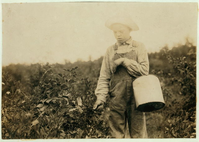 Homer Hunt, 11-year old berry picker. Says he has been out of school half the time for some weeks picking, and has made $10. Gets 10 cents a gallon. They are wild blackberries. The teacher of his school, Maretburg School, says there are many absent from time to time for berries, corn, etc.  Location: Rockcastle County--Maretburg, Kentucky / Lewis W. Hine.