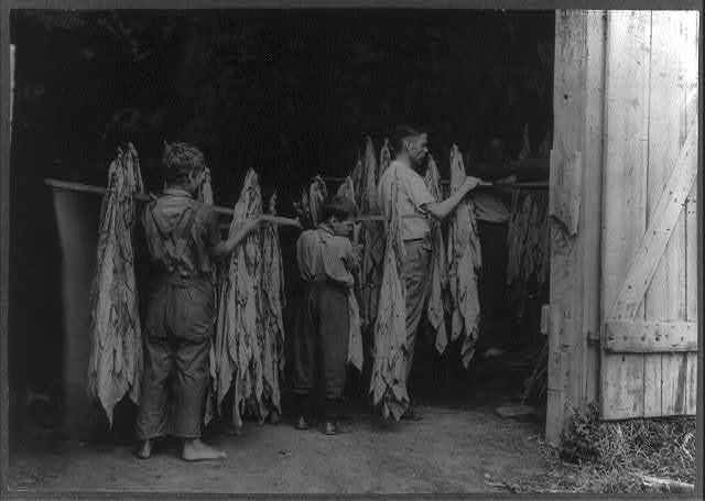 Housing tobacco in barn of W.L. Fugate. Will go to Schoolsville School but it has not opened on account of repairs. Lewis W. Hine. See 4398-9 and 4400.  Location: Hedges Station, Kentucky.