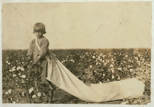 Norma Lawrence is 10 years old and picks from 100 to 150 pounds of cotton a day. Drags the sack which often hold 50 pounds or more before emptied. Lewis W. Hine. See 4569.  Location: Comanche County, Oklahoma.