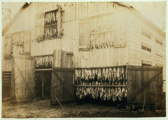 Tobacco barn, showing how it is dried.  Location: Winchester [vicinity], Kentucky / Lewis W. Hine.