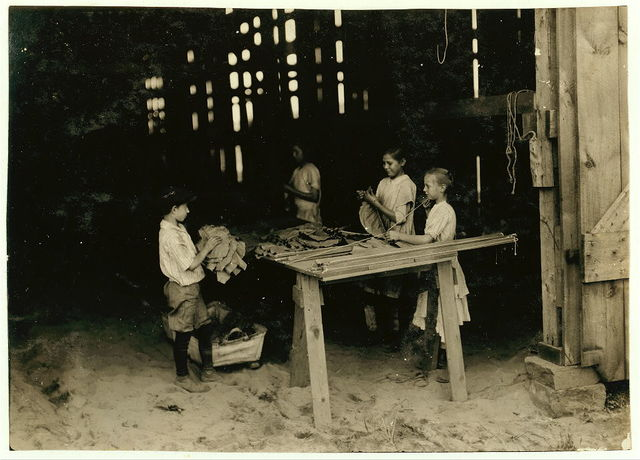 """10 year old leaf boy and three """"stringers"""" 10, 12, and 13 years old. Tobacco shed of American Sumatra Tobacco Co. In these two sheds were 41 girls and boys from 10 to 15 years old, and only 24 girls and women of 16 years and over. The leaf-boys get $1.50 a day and some of the stringers of 10 and 12 make $1.20 a day, according to the Supt.  Location: S[outh] Windsor, Connecticut / L.W. Hine."""