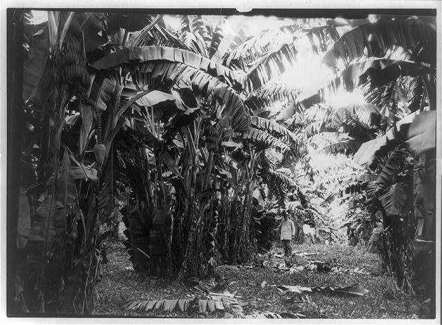 Bananas, Cuba