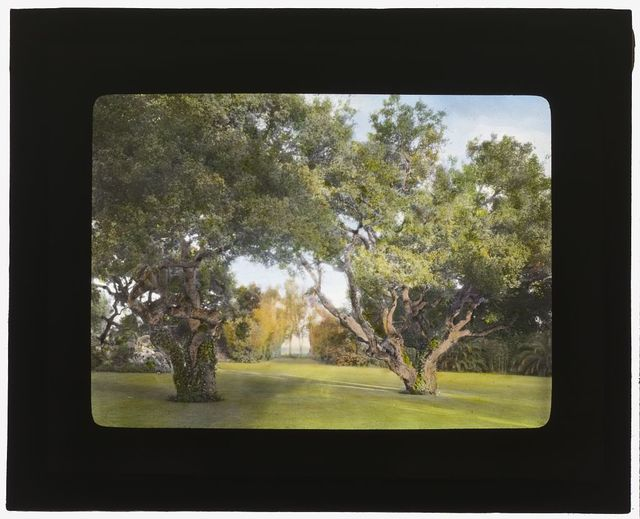 "[""La Chiquita,"" Francis Townsend Underhill house, Channel Drive, Montecito, California. View from house to live oaks]"