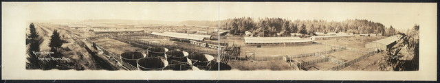 "Remount Station, ""Camp Lewis"", Tacoma, Wash."
