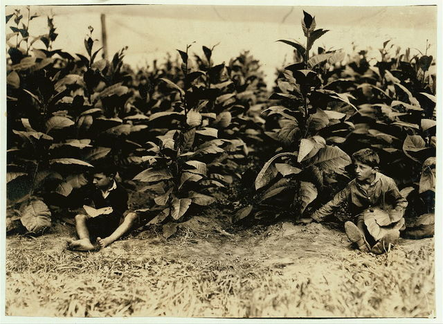 Young pickers (4899).  Location: Weatogue, Connecticut / L.W. Hine.