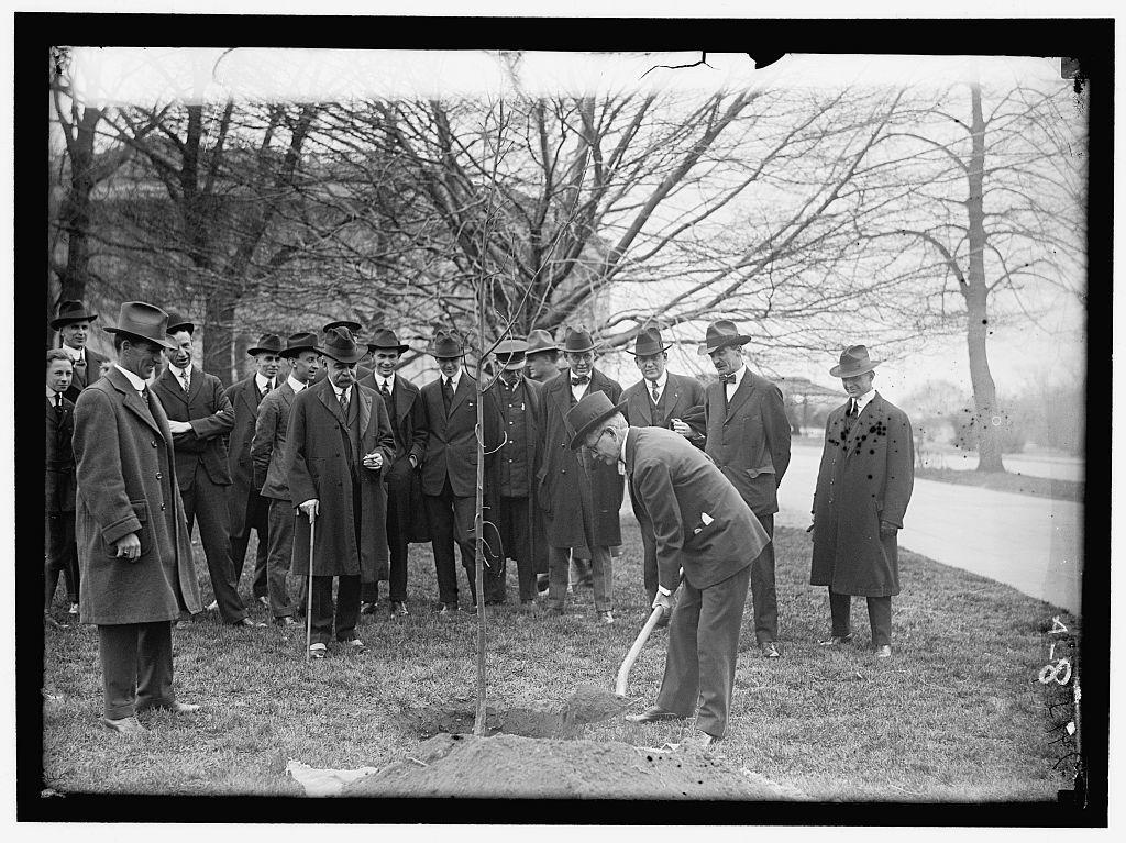 CAPITOL, U.S. TREE PLANTING: MARSHALL WITH SHOVEL; SAULSBURY AT LEFT; HALSEY ANDPRESTON BACK OF MARSHALL. OTHERS ARE NEWSMEN