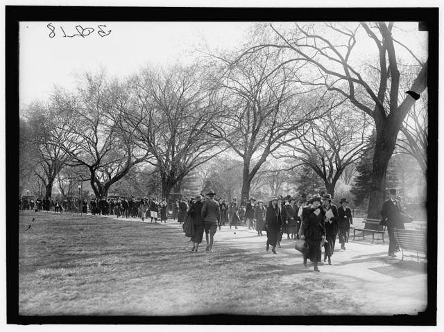 CHERRY BLOSSOMS IN POTOMAC PARK, WASHINGTON, D.C. AROUND TIDAL BASIN