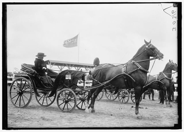 HORSE SHOWS. MISC., UNIDENTIFIED