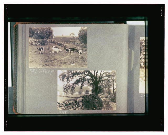 Reference prints, 1919-1920, numbers 2133-2377. Cows in field with barn in background; Dirt road bordered on left by rock wall
