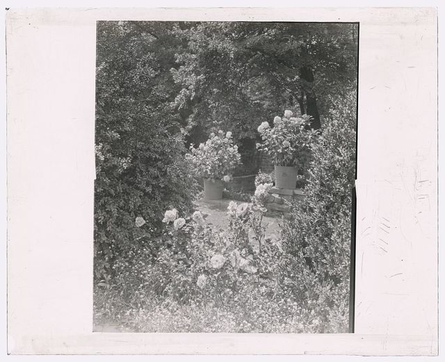 "[""Stonehurst,"" Charles William Henry house, Cherokee Street, Chestnut Hill, Pennsylvania. Hydrangea in tubs]"