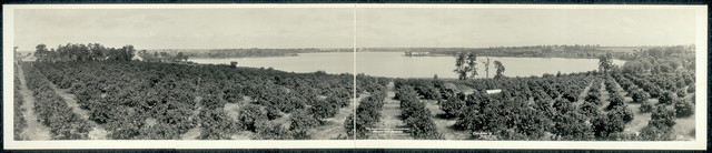 """The Land of Lakes and Citrus Groves,"" Haines City, Florida"