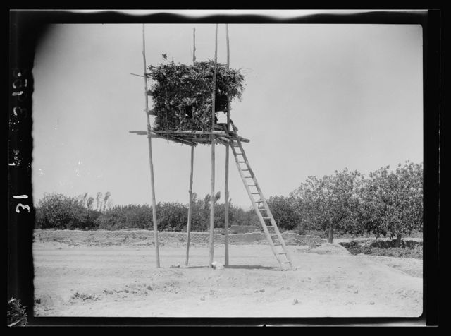 Agriculture, etc. A stilted watch-tower near Damascus. A leafy bower on high poles reached by a ladder