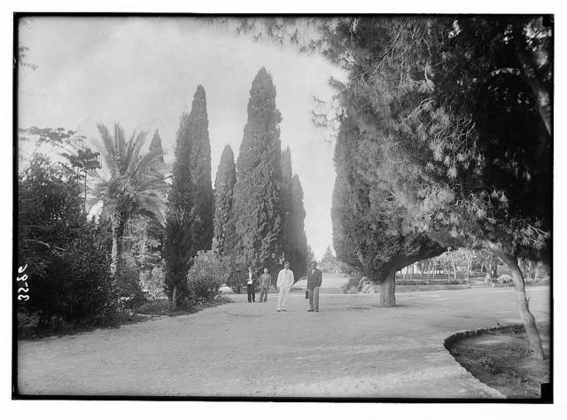 American University. Beirut, (A.U.B.). Campus grounds. Showing picturesque cypresses and palms etc.