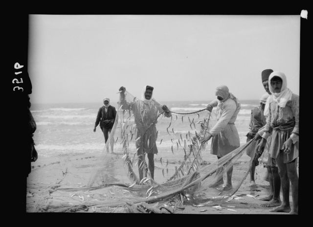 Carmel and Haifa. Part of the catch. Fisherman removing the catch