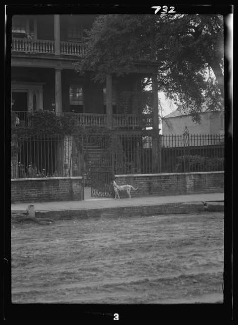 Dog standing by the gate to a house, New Orleans or Charleston, South Carolina