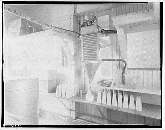 Farming scenes. Bottling goat milk in dairy