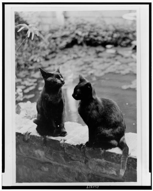 [Frances Benjamin Johnston's cats, Herman and Vermin, seated on brick railing of New Orleans house, Louisiana]