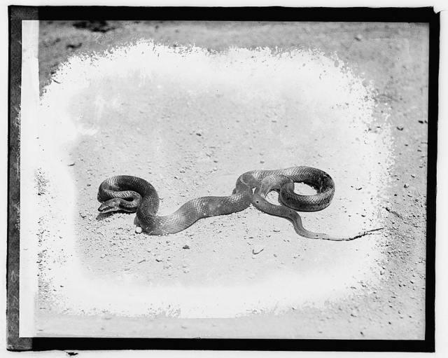 Fredericksburg tour, black snake