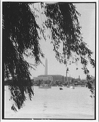 Hains Point. Weeping willow at Hains Point I