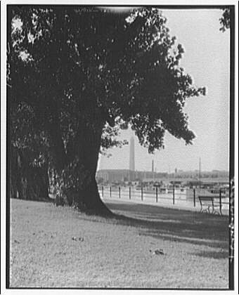 Hains Point. Weeping willow at Hains Point II