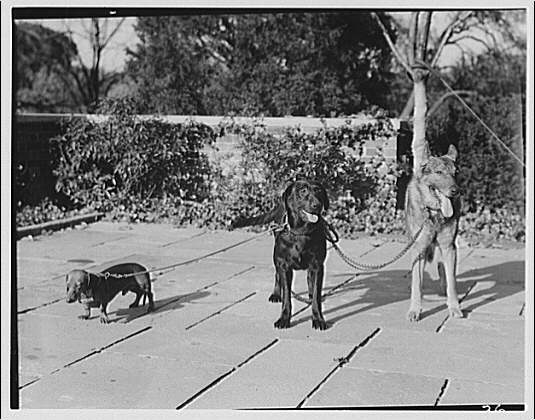Mrs. Ryan's home at 17 Foxhall Rd. All three dogs together I