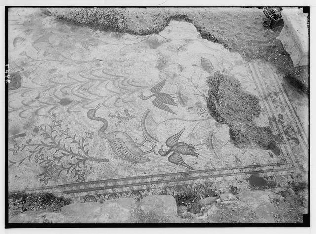Northern views. Ain Tabgha. Mosaic floor. Water fowl, etc.